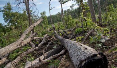 Mianmar aprende com o Brasil a combater desmatamento