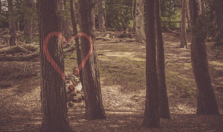 Como saciar a sede do coração do homem? Confira o texto de dom Henrique Soares